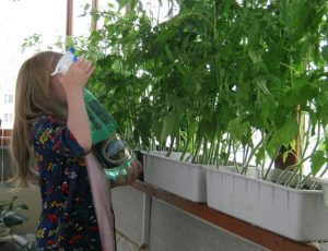 uxod-za-tomatami