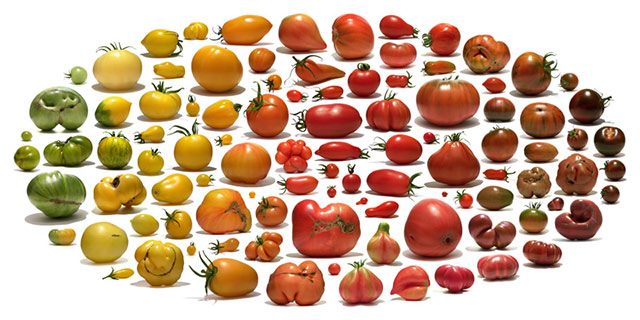 all-types-tomatoes