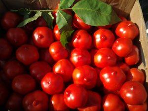 домати дива ревюта снимка, който засадени