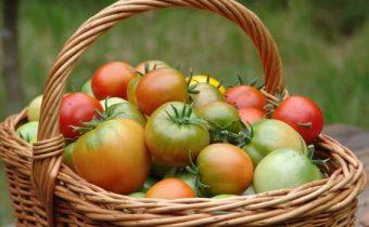 tomate sapin argenté caractéristique et description de la variété
