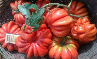 American tomato ribbed variety characteristic and description