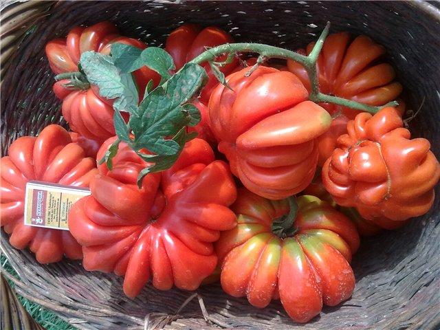 Характеристика и описание на американските ребристи домати