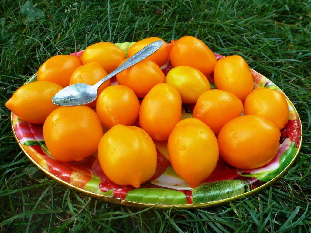 Доматено чудо на световната характеристика и описание на сорта