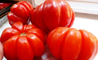 tomato puzata hut reviews photos yield