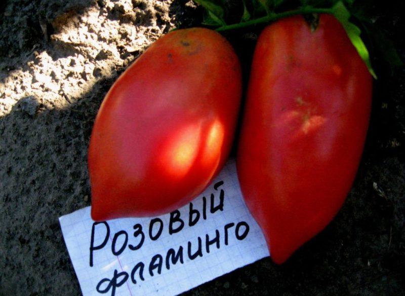 характеристика на розово фламинго от домати и описание на сорта