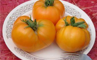 tomato golden domes variety description photo reviews