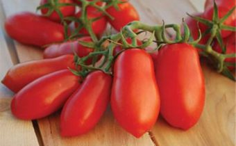 tomato lady fingers characteristic and description of the variety