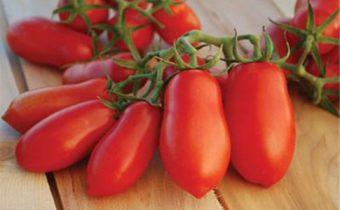 doigts de tomate caractéristiques et description de la variété