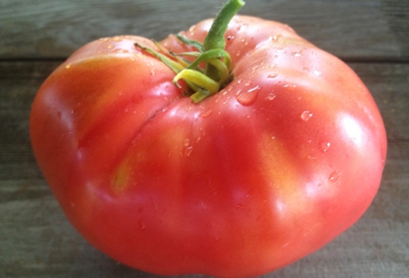 tomato pink honey variety description