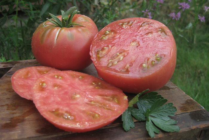 Tomato Mikado pink characteristic and description of the variety