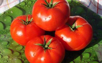 Tomate Bobcat caractéristique et description de la variété