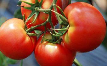 tomate rouge rouge caractéristique et description de la variété