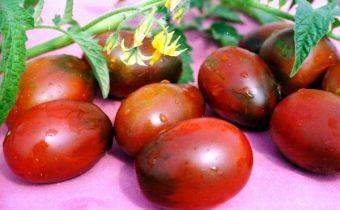 tomato de barao characteristic and description of the variety