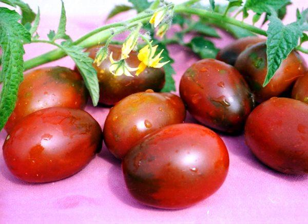 характеристика на доматите и барао и описание на сорта