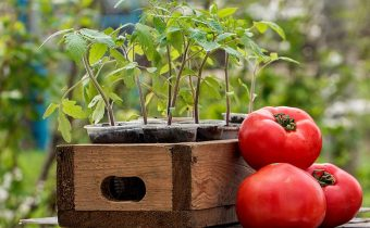 when to plant tomatoes for seedlings in 2018 for the greenhouse on the lunar calendar?