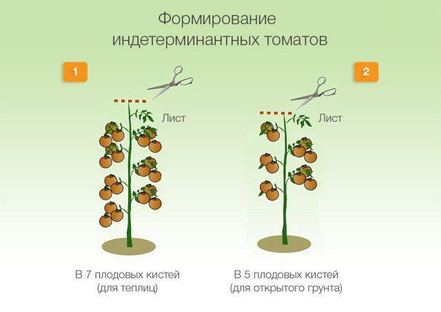 Образуване на неопределени домати