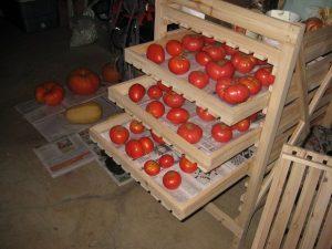 tomates en boîtes