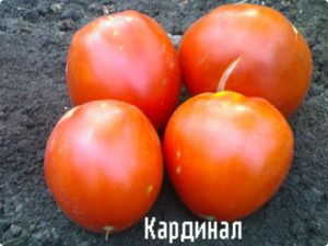 tomates, variété cardinale