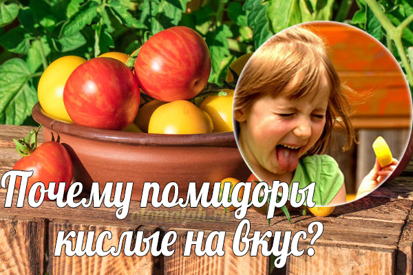 Why does tomatoes taste sour?