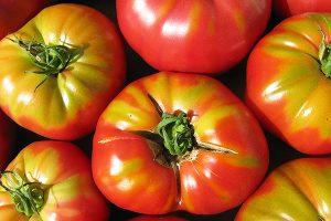 Varieti Tomat Sweet