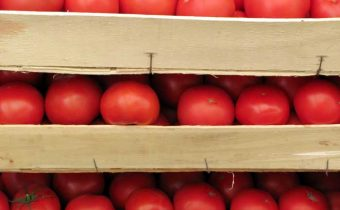 tomatoes in boxes