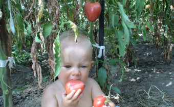 enfant mange de la tomate