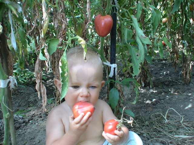 child eats tomato
