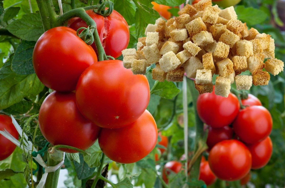 craquelins aux tomates