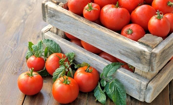 tomato stimulator
