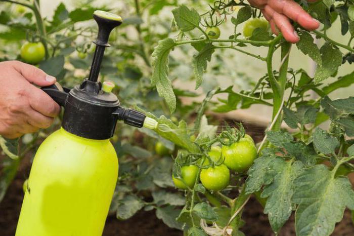 Преработка на домати трихопол