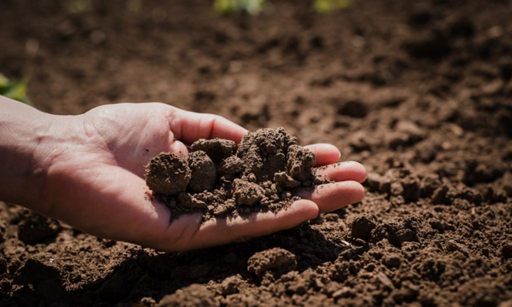 Киселинност на почвата