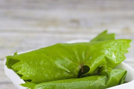 cucumbers in leaves