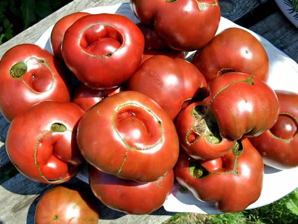 tomates laides
