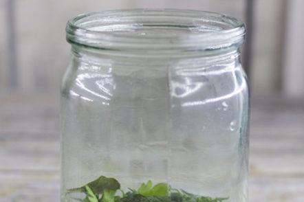 поставяйки зелено в буркан