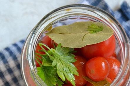 tomates en train de pondre