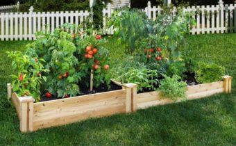 Tomatoes by the method of Metlider