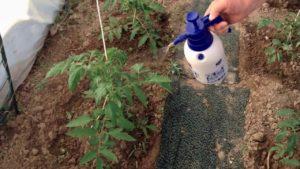 sprayed with Quadris fungicide