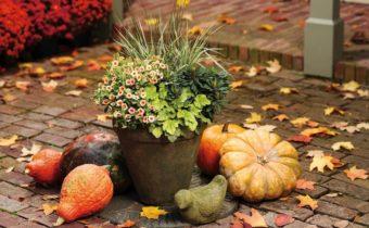 garden work in october