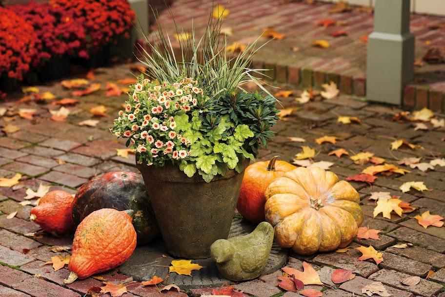 travaux de jardin en octobre