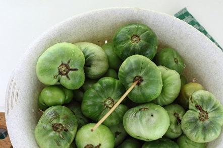 préparation de tomates