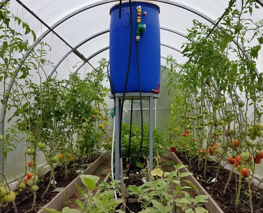 drip irrigation in the greenhouse