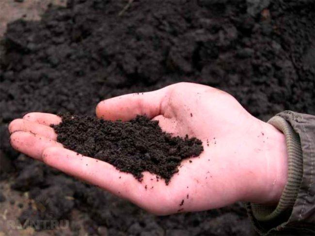 keasidan tanah