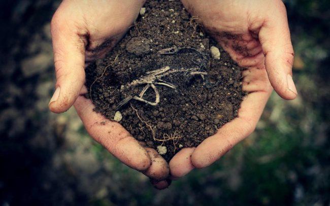 почвата