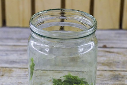 garlic with herbs in a jar