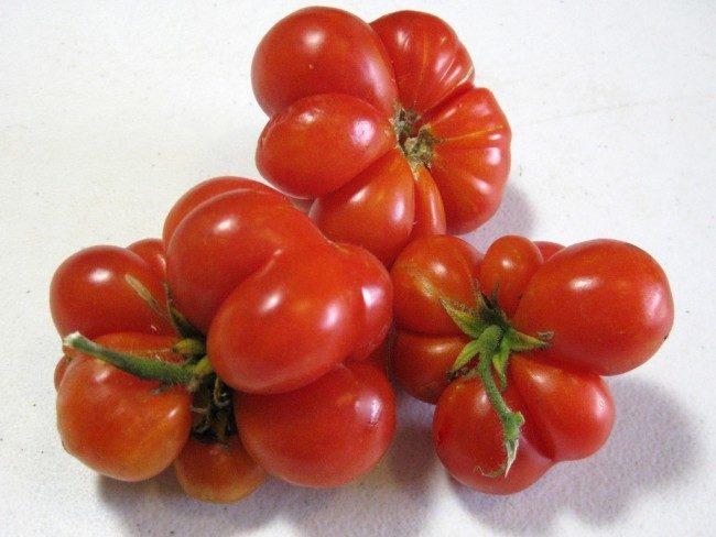 домати Reysetomeyt