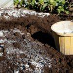 варене на почвата под домати