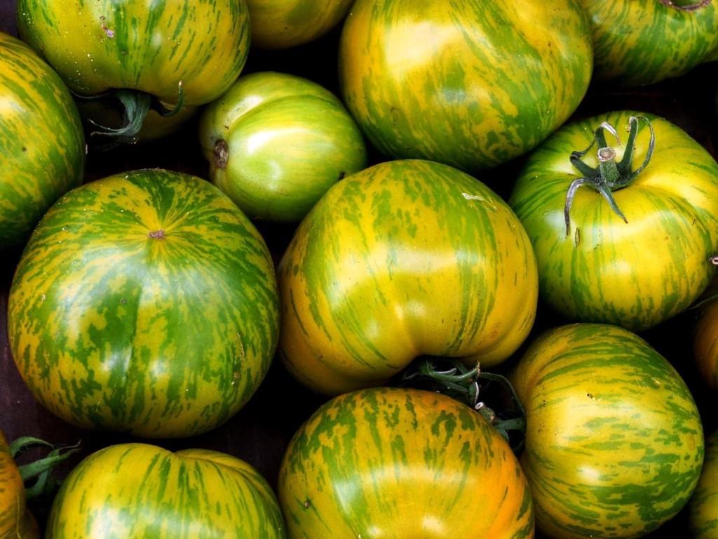 Green Tomato Varieties