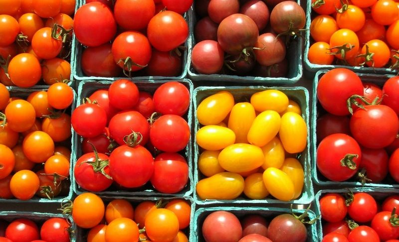 the sweetest tomato varieties