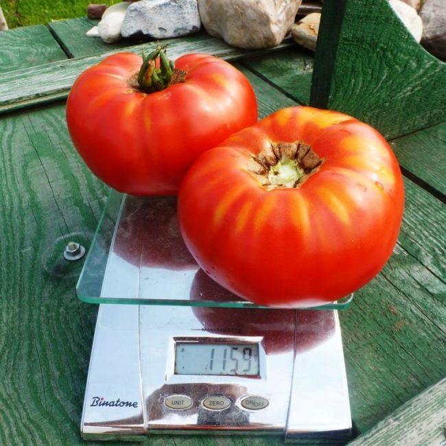 délices de tomates géantes