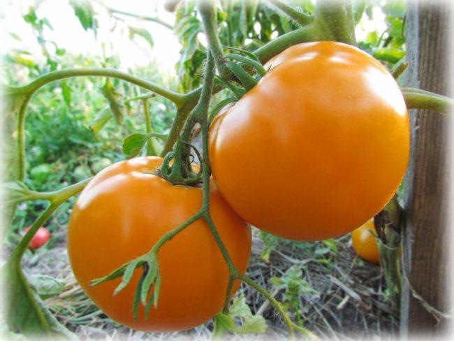 tomato persimmon